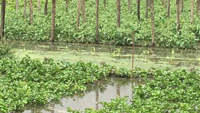 sarno straripa il fiume terreni coltivati distrutti