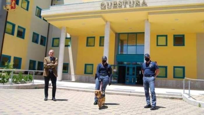 wally mascotte a quattro zampe della polizia