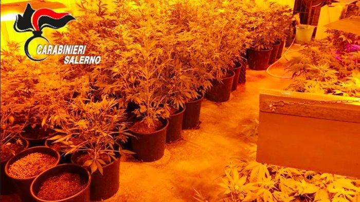 pagani scoperta piantagione marijuana sequestrate 110 piante
