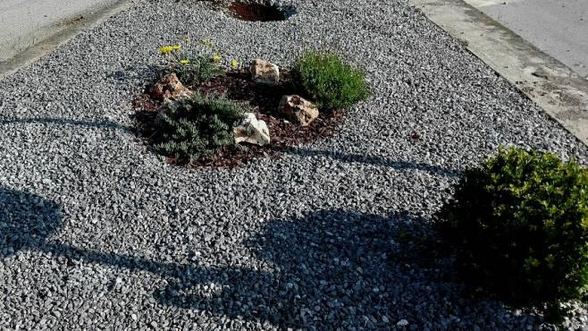 Solofra ladri dal pollice verde nella zona industriale for Alberelli ornamentali