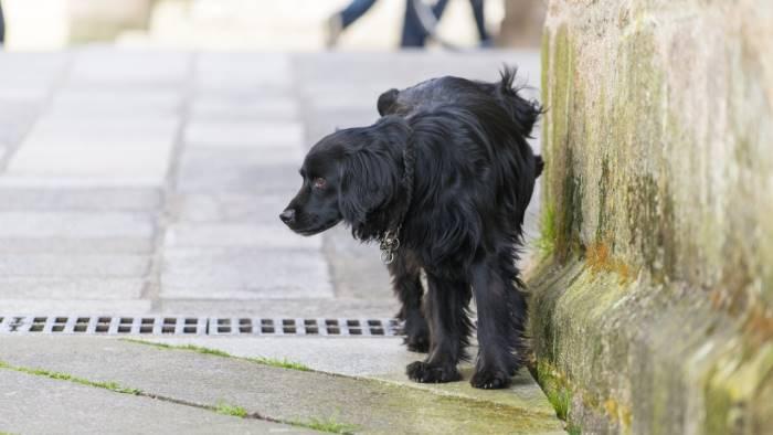 se il cane fa pipi per strada c e la multa mentre da noi