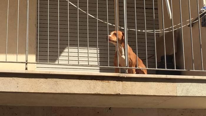 1200 cani morti perche lasciati sui balconi appello a sindaci