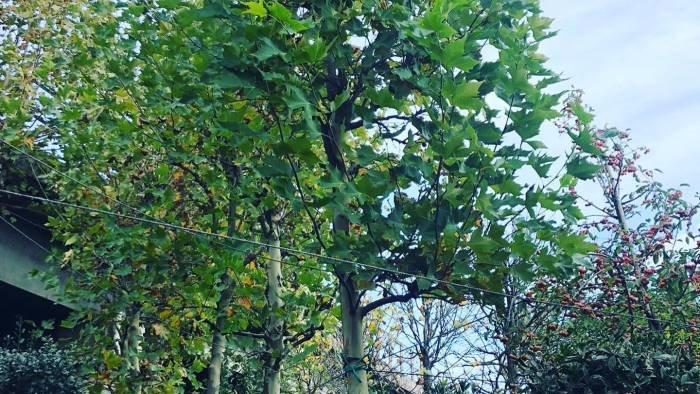 castel san giorgio green donati 200 alberi al territorio