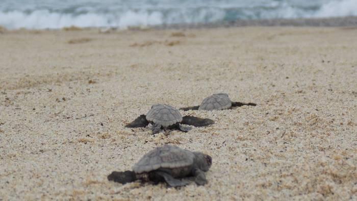 nido di tartarughe a marina di camerota l appello dell enpa