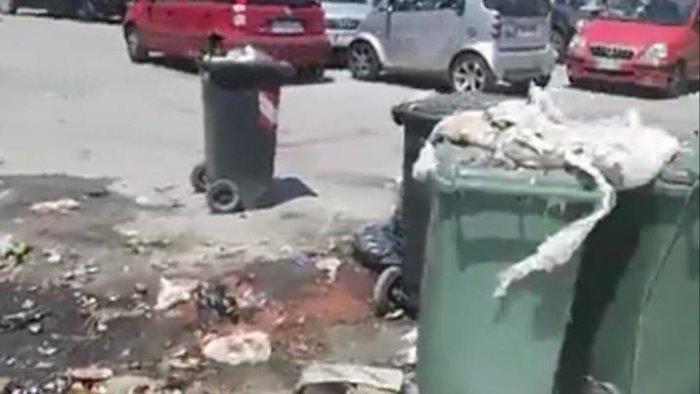 rifiuti in via ligea codacons attacca il comune