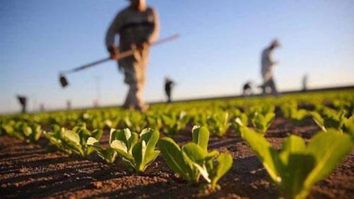 covid19 coldiretti pagata prima tranche dei bonus agricoli
