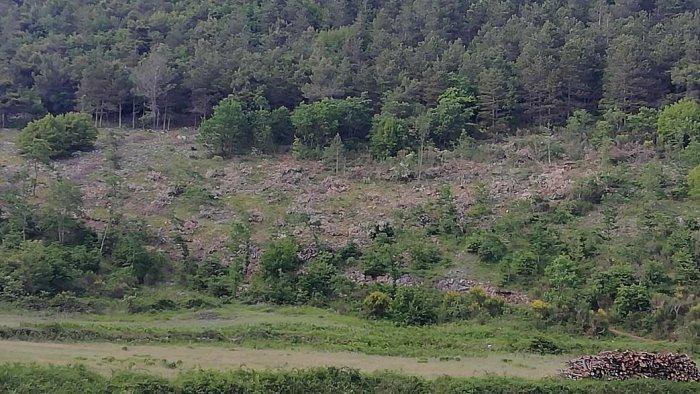 taglio abusivo di bosco a montesano sulla marcellana