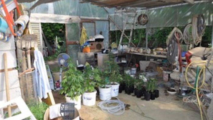 non ricambi di auto ma piante di marijuana arrestato 30enne