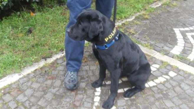 E Un Poliziotto Irpino Il Conduttore Del Labrador Anti Droga