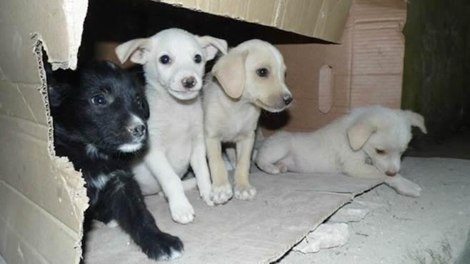 valle caudina trovati otto cuccioli abbandonati