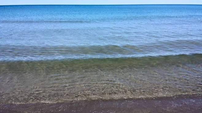 Avvistato branco di squali, capitaneria allontana bagnanti