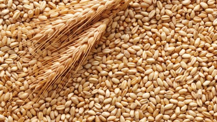 a cautano slow food accende i riflettori sui grani antichi