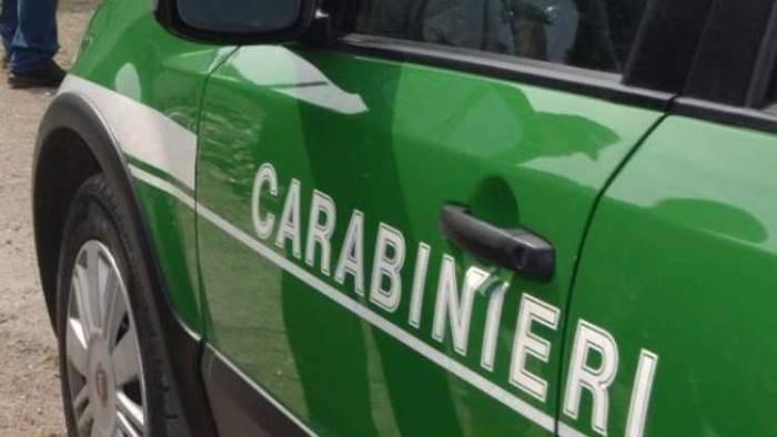 combustione residui vegetali controlli dei carabinieri
