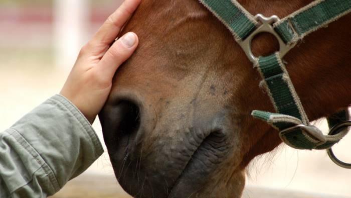 sgozza un cavallo nel cortile di casa denunciato