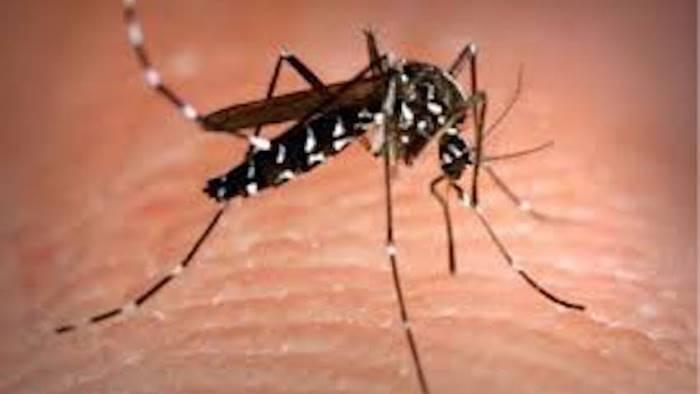 zanzara tigre massima allerta in campania