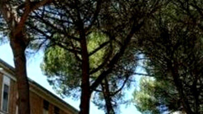 abbraccia il tuo albero domenica la consegna dei certificati