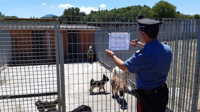 incatenati malati sofferenti 12 cani in condizioni assurde