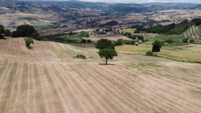 agricoltura necessaria liquidita per sostenere rilancio