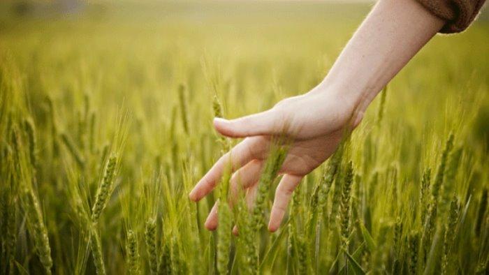 70 mila euro per finanziare progetti di agricoltura sociale