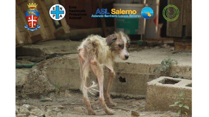 eboli scoperto lager dei cani rinchiusi in gabbie tra escrementi e ossa