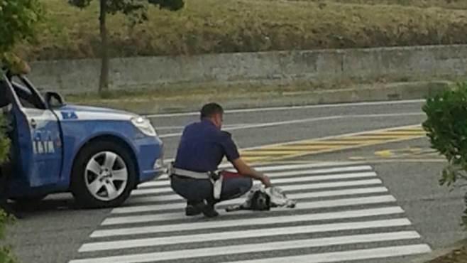 veglia sul cane per un ora quel poliziotto ha commosso tutti