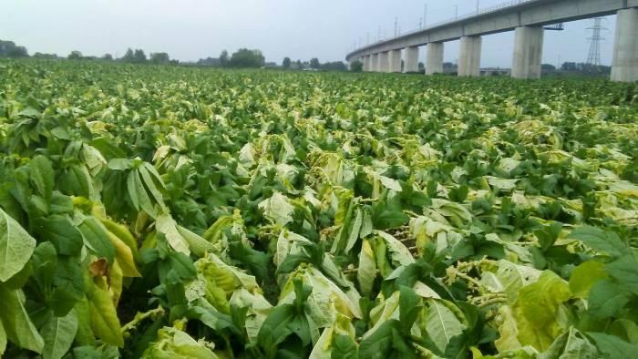 agosto pazzo coldiretti danni alle colture agricole