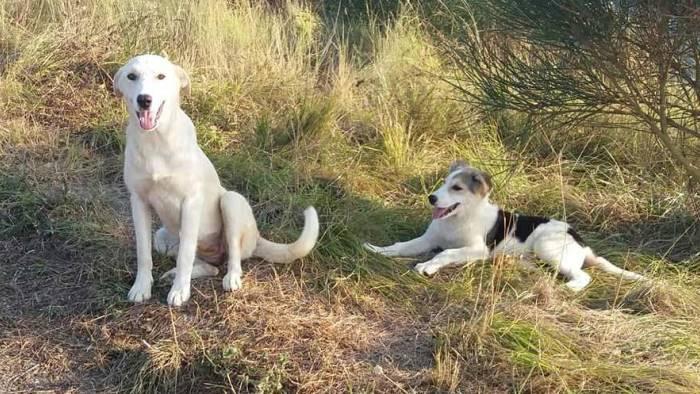 cani questa e l estate dei cuccioli abbandonati