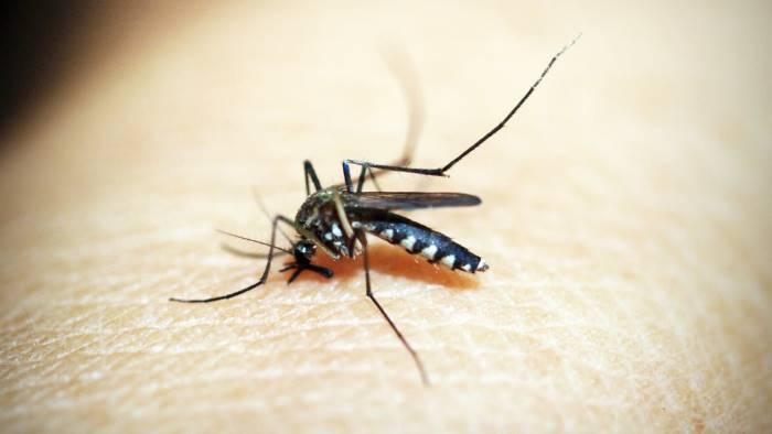 punto da insetto stramazza a terra paura per un 30enne