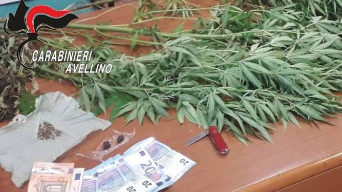 coltiva marijuana sul balcone di casa 40enne denunciato