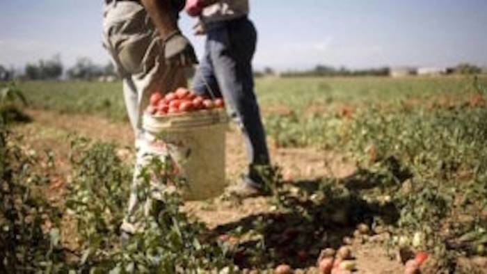 bulgari ridotti in schiavitu maxi multe all azienda