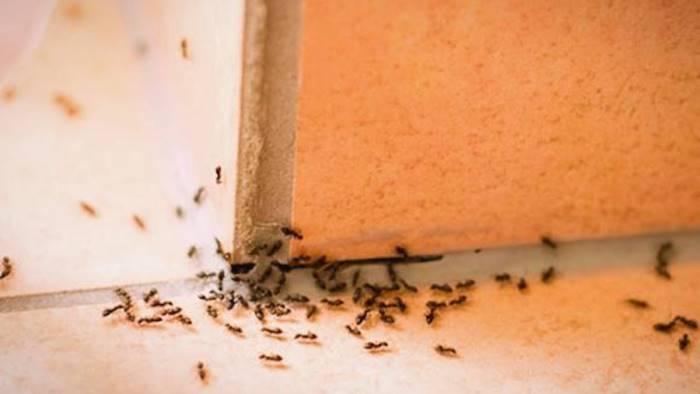 Salma ricoperta di formiche all'ospedale di Scafati: la denuncia
