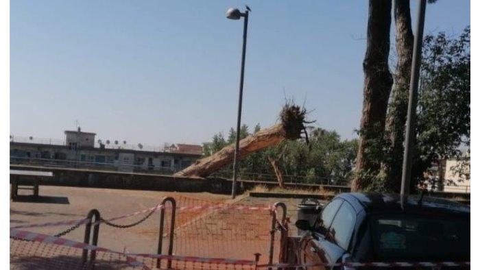 napoli albero cade e danneggia diversi motorini