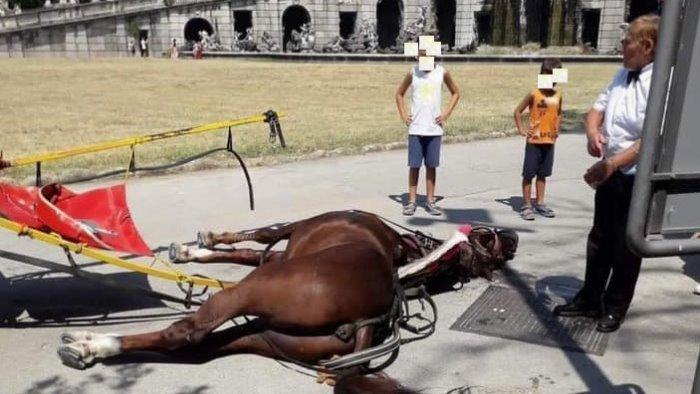 reggia cavallo da calesse stroncato da malore sotto il sole