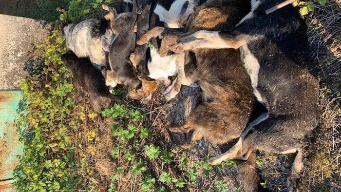 strage di cani a sassano oipa chi sa parli