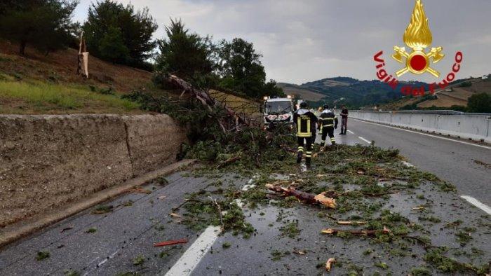 albero di grosso fusto cade improvvisamente in autostrada