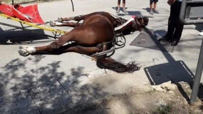 cavallo morto alla reggia procura apre un inchiesta