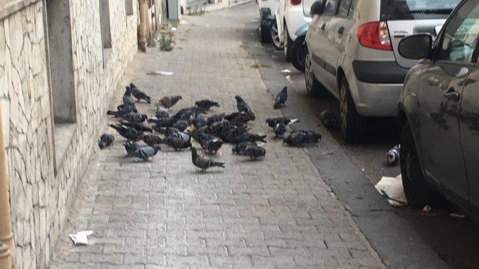 salerno invasione di piccioni in via san giovanni bosco