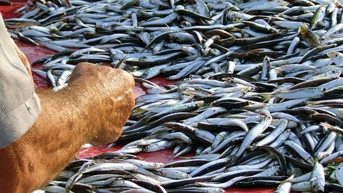 Stop al pesce fresco a tavola per l avvio del fermo pesca - Pesci comuni in tavola ...