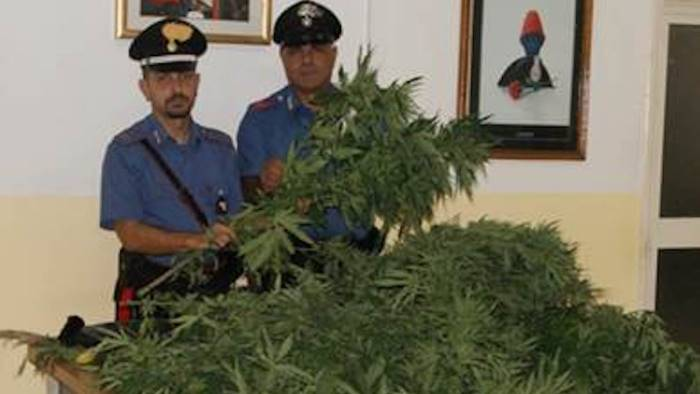 coltivano marijuana arrestate tre persone
