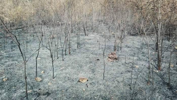 fiamme all oasi di persano il wwf uditi spari azione mirata