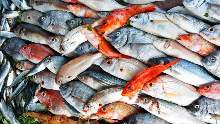 pesce fresco da domani fermo pesca in campania