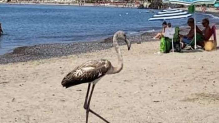 il cilento non smette mai di stupire fenicotteri in spiaggia