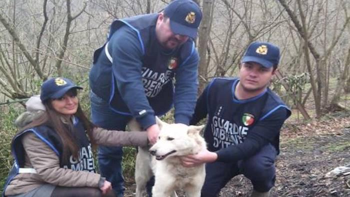 cane finisce nel torrente salvato dalle guardie ambientali