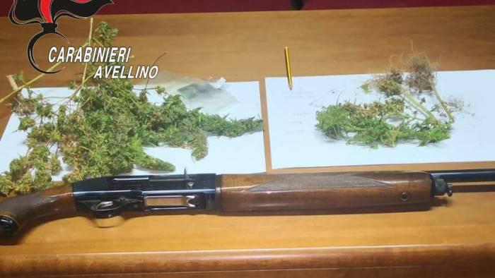 filiera indoor di marijuana denunciato 30enne