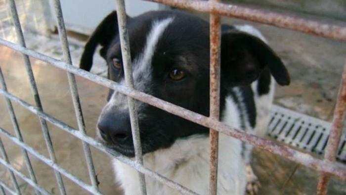 vive in casa con 14 cani in condizioni igieniche precarie