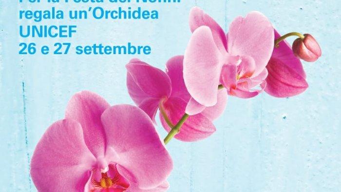 festa dei nonni torna l orchidea unicef