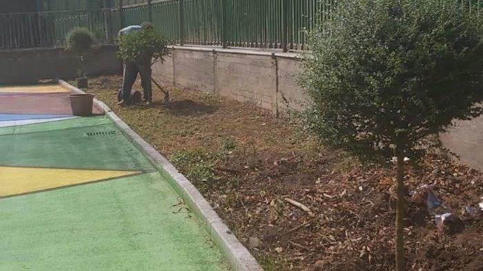roccapiemonte piantati nuovi alberi all istituto vassalluzzo
